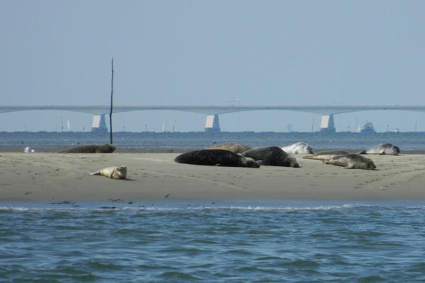 Speedbootverhuur-verhuur-Westerschelde-antwerpen-zeeleeuwen